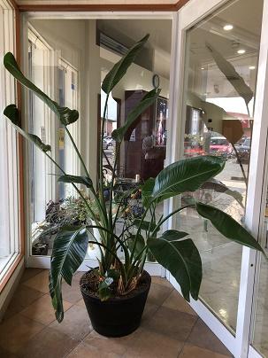 出入り口の植木